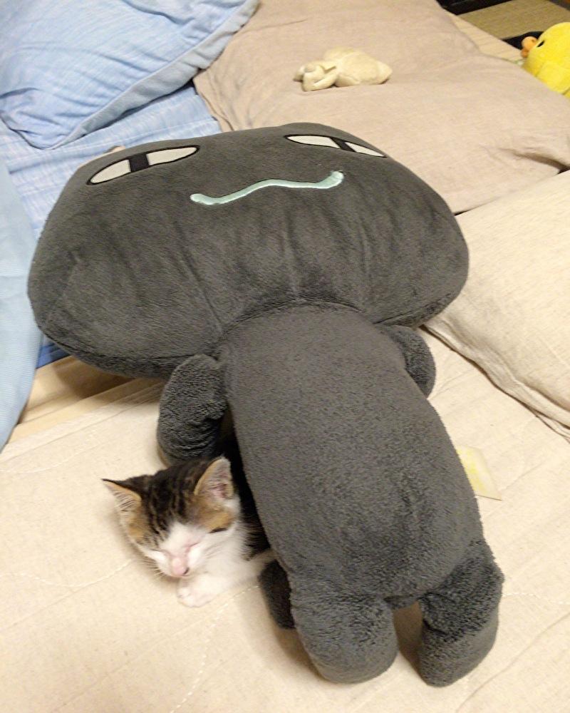 どこでもいっしょのクロのぬいぐるみに潜り込むキジトラ白の野良猫ういちゃん