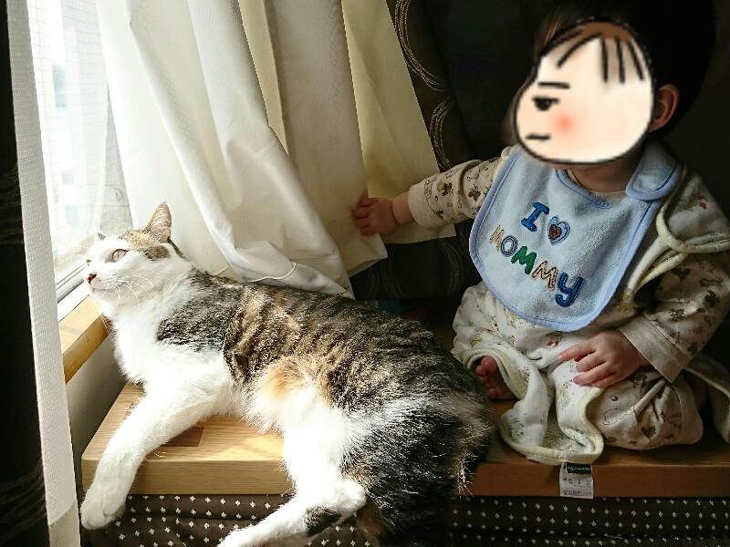 日の光を浴びるキジトラ白の猫ういちゃんと息子
