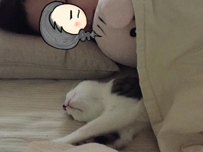 添い寝するキジトラ白の猫・ういちゃん
