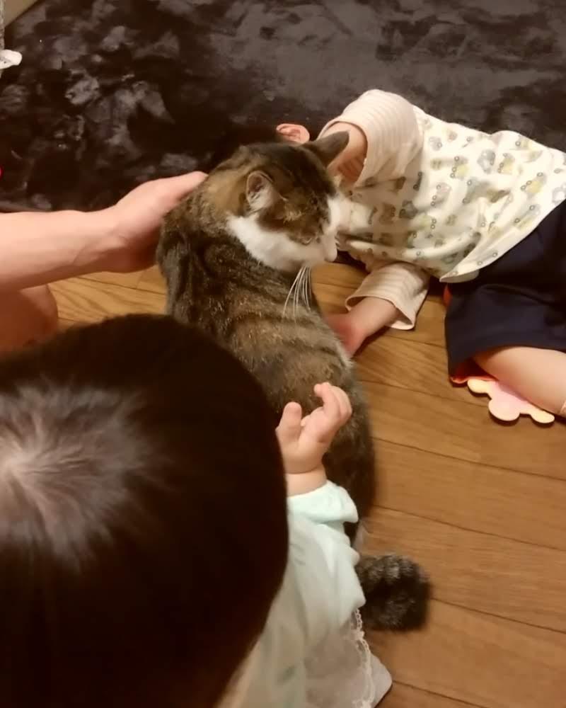 3人になでられるキジトラ白の猫