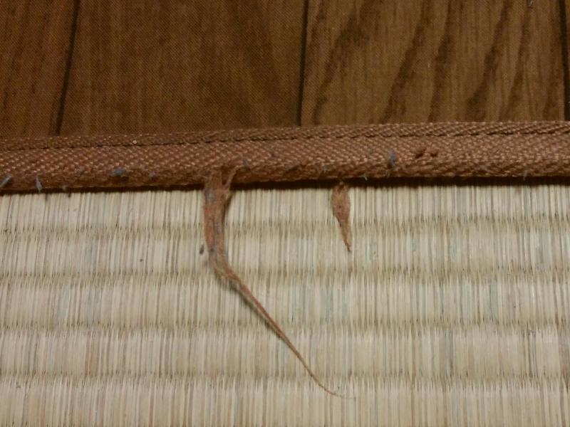 猫に咬まれたホットカーペットのふち