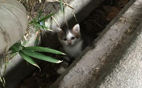 キジトラ白の野良の子猫・ういちゃん