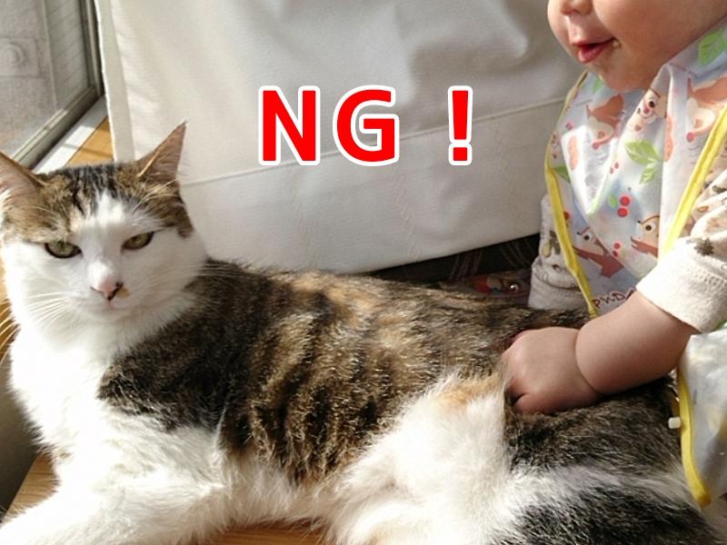 乳幼児に猫はNG